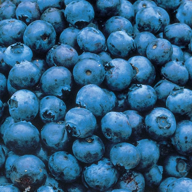 blue berry2