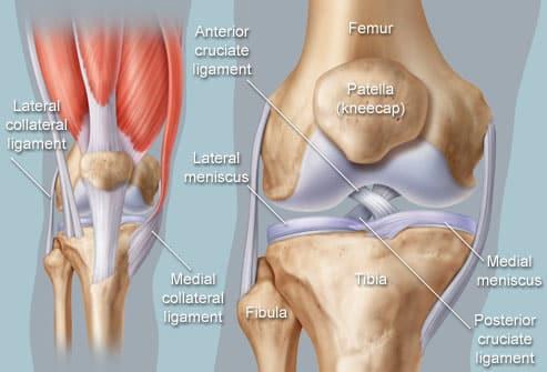 1. knie ligamenten
